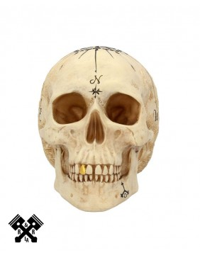 Dead Man's Map Decorative Skull, front