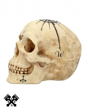 Dead Man's Map Decorative Skull, right profile